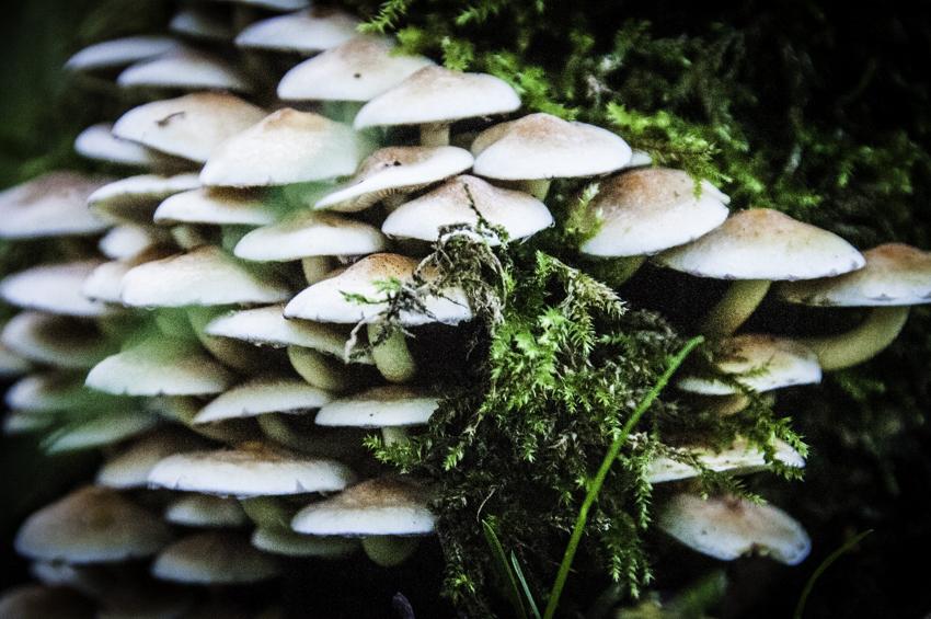 Jezus, nog meer paddenstoelen