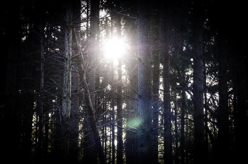 Achter de bomen
