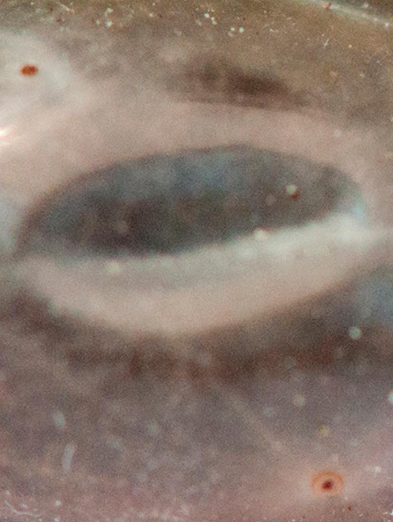 Rhipicephalus-sanguineus-closeup